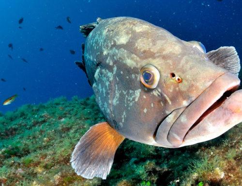 Protocole FAST : Évaluation des peuplements de poissons