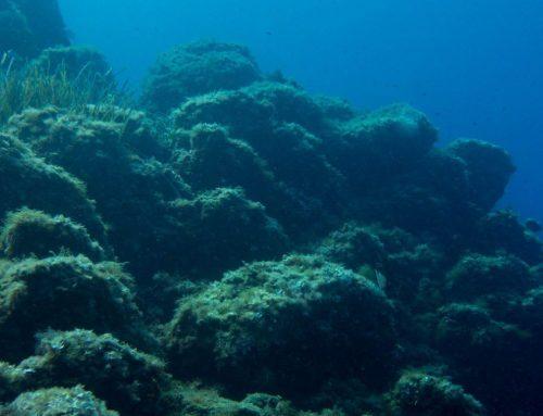 Protocole SeaScape : Évaluation de l'Indice Paysager sous-marin